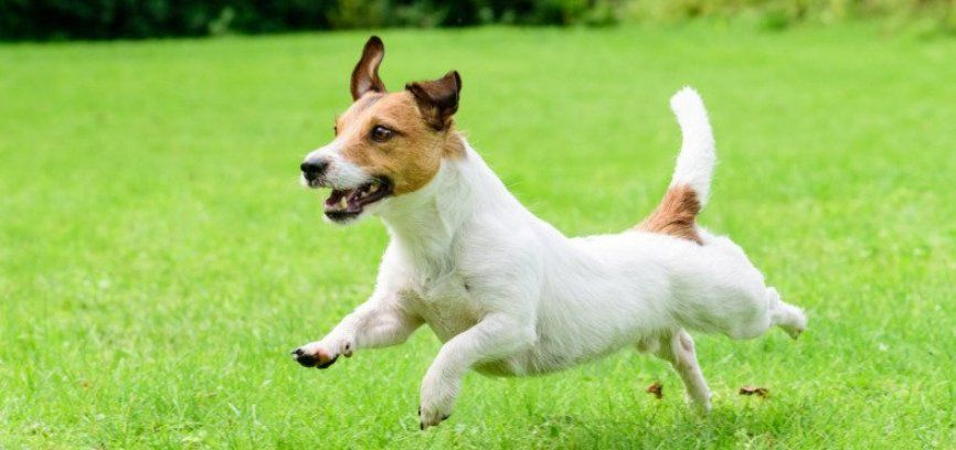 Cani senza guinzaglio anche sull'argine sinistro della Maggia?
