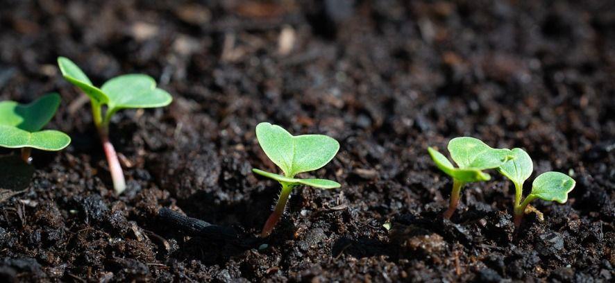 Locarno incoraggia l'agricoltura biologica